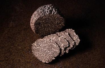 Tuber Melanosporum, à la découverte de la truffe noire